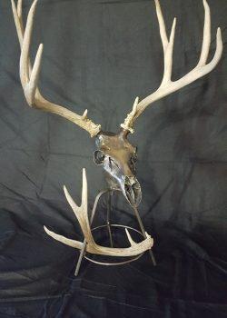 Deer on Stand